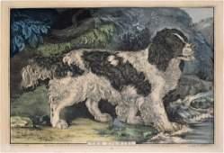 Currier The Spaniel