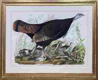 Audubon, Female Turkey, Plate 6