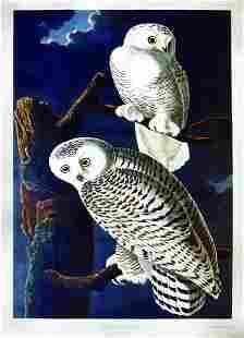 Audubon, Snowy Owl, Plate 121