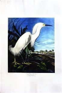 Audubon, Snowy Heron or White Egret, Plate 242