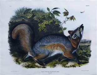 Audubon Lithograph, Grey Fox - State Animal of Delaware