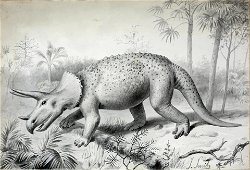 Smit Original Early Drawing of a Triceratops - Ushing