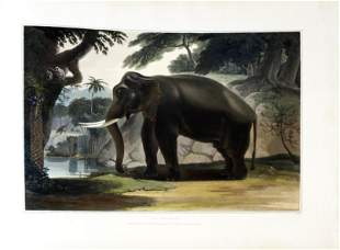The Finest Work on Animals of Ceylon Ever Published -