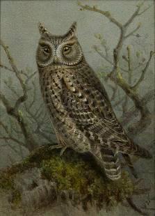 Keulemans Original Watercolor of a Scops Owl