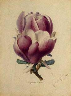Ricocreux Original Watercolor of a Magnolia Lenne
