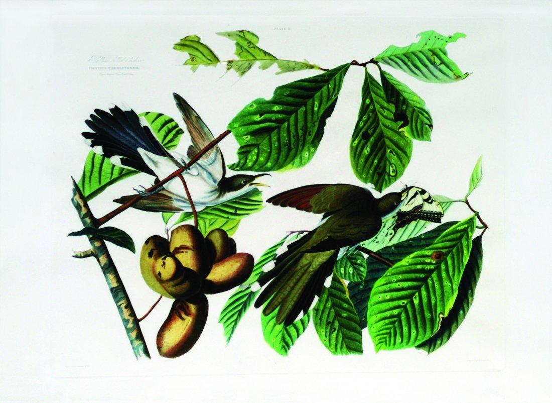 John James Audubon, Plate 2: