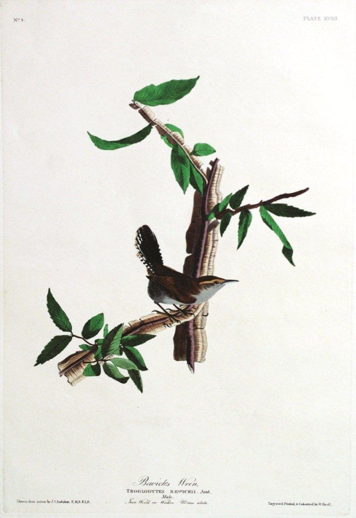 John James Audubon, Plate 18: