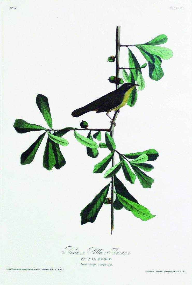 John James Audubon, Plate 24: