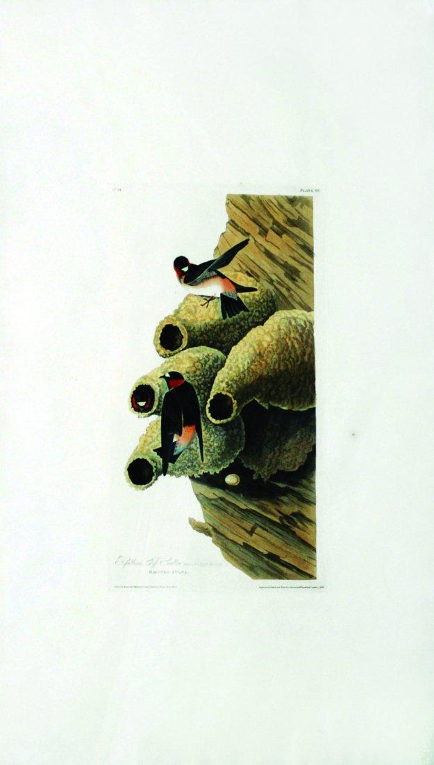 John James Audubon, Plate  68: