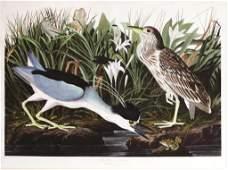 John James Audubon, Plate 236 :