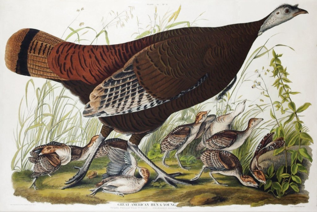 John James Audubon, Plate 6: