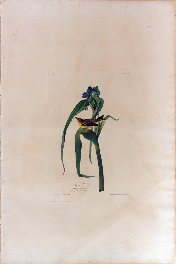 John James Audubon, Plate 30
