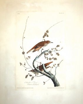 John James Audubon, Plate 58: