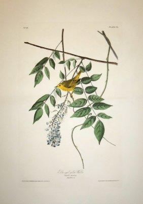 John James Audubon, Plate 95: