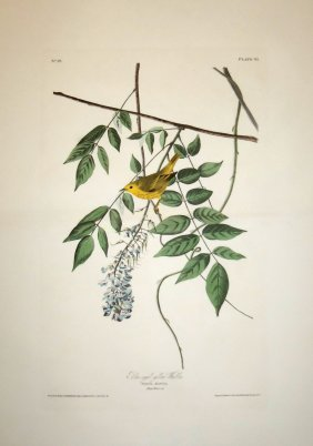 John James Audubon, Plate 95: