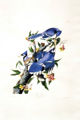 John James Audubon, Plate 102: