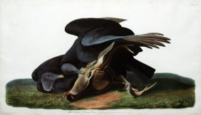 John James Audubon, Plate 106 :