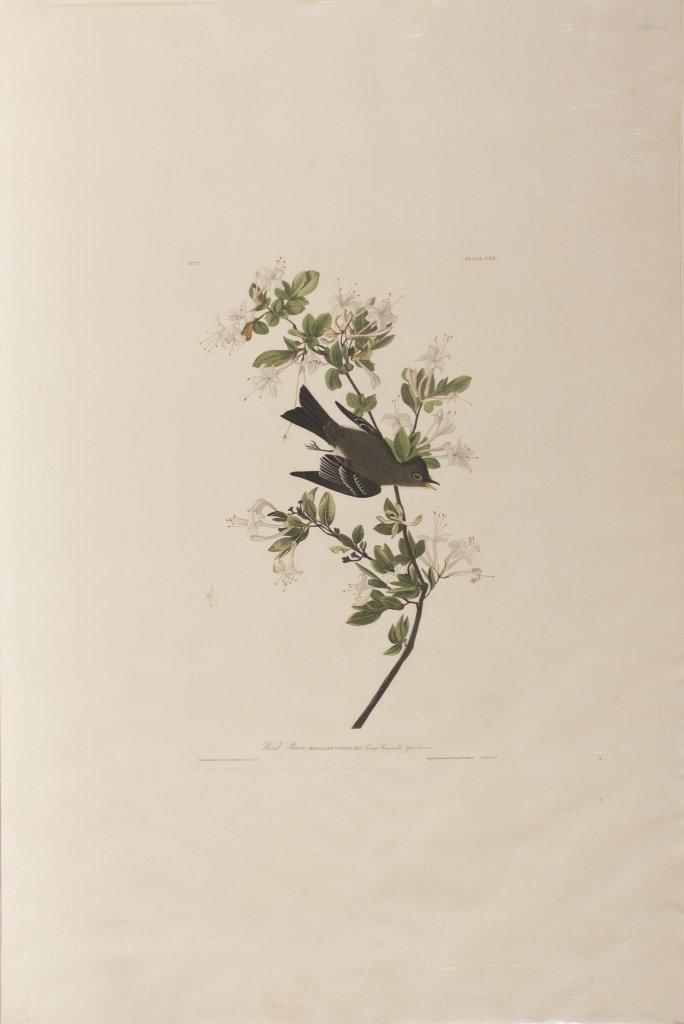John James Audubon, Plate 115:
