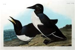 John James Audubon, Plate 218: