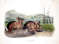 John James Audubon, Plate 108: