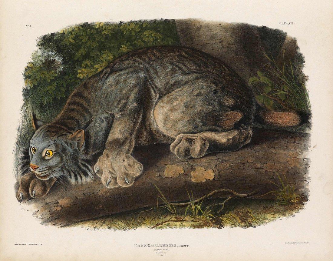 John James Audubon, Plate 16: