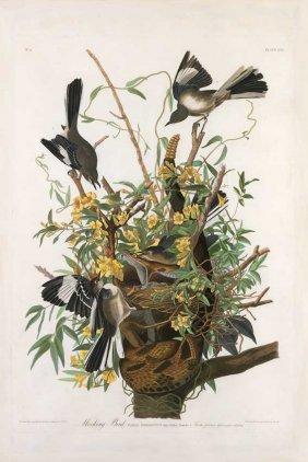 John James Audubon, Plate 21: