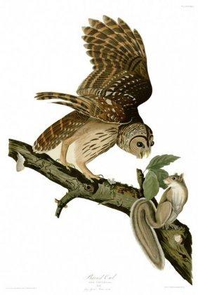 John James Audubon, Plate 46: