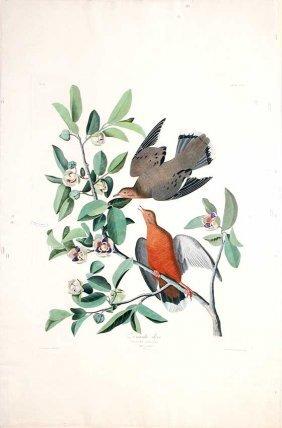 John James Audubon, Plate 162: