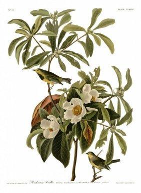 John James Audubon, Plate 185: