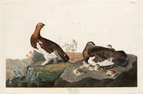 John James Audubon, Plate 191: