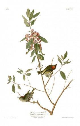 John James Audubon, Plate 195: