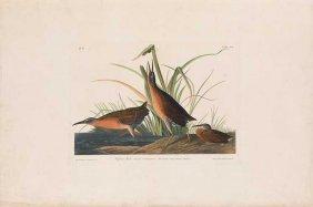 John James Audubon, Plate 205: