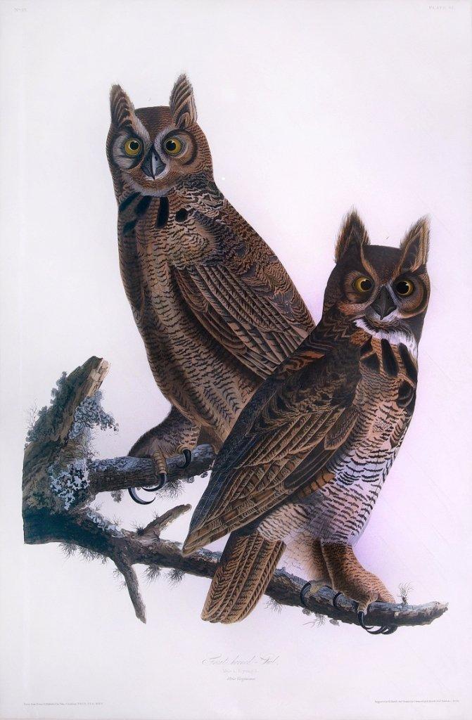 John James Audubon, Plate 61: