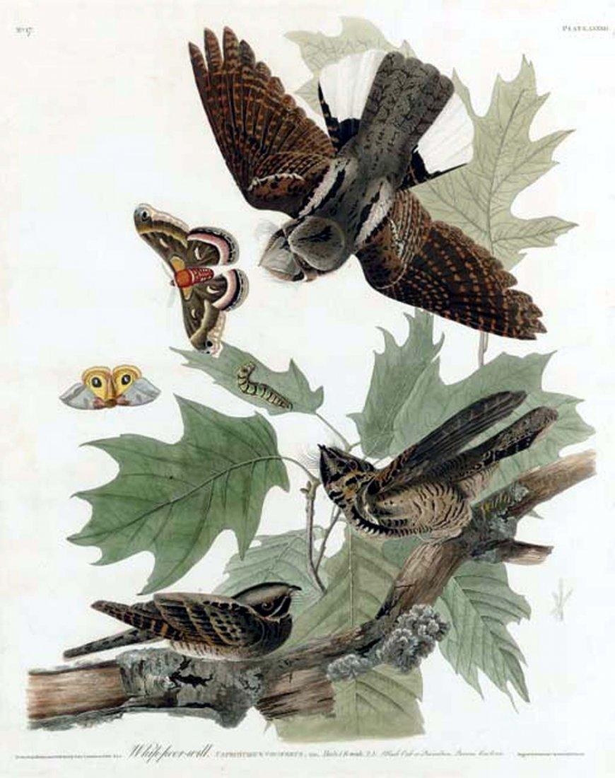 John James Audubon, Plate 82: