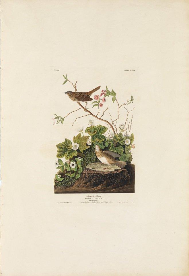 John James Audubon, Plate 193: