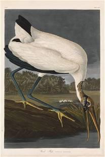 John James Audubon, Plate 216: