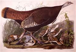 John James Audubon, Great American Hen and Young, Plate