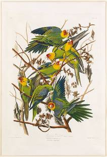 John James Audubon, Carolina Parrot, Plate 26