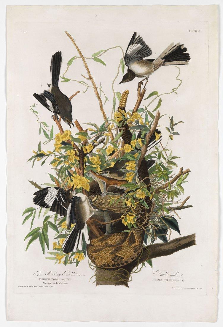 Mockingbirds, Plate 21