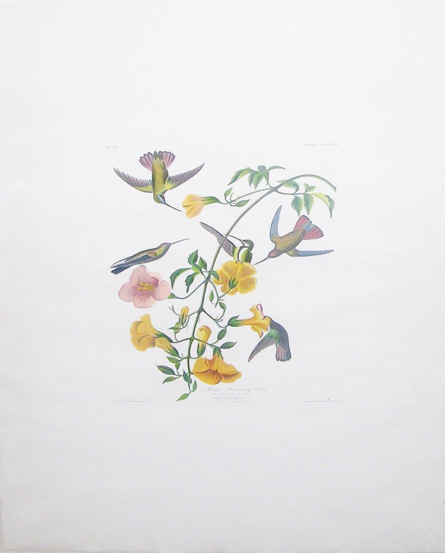 Mango Humming-bird, Plate 184