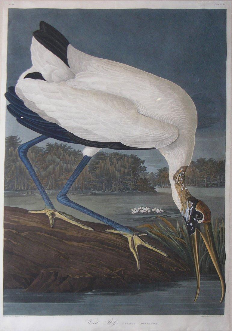 Wood Ibis, Pl 216