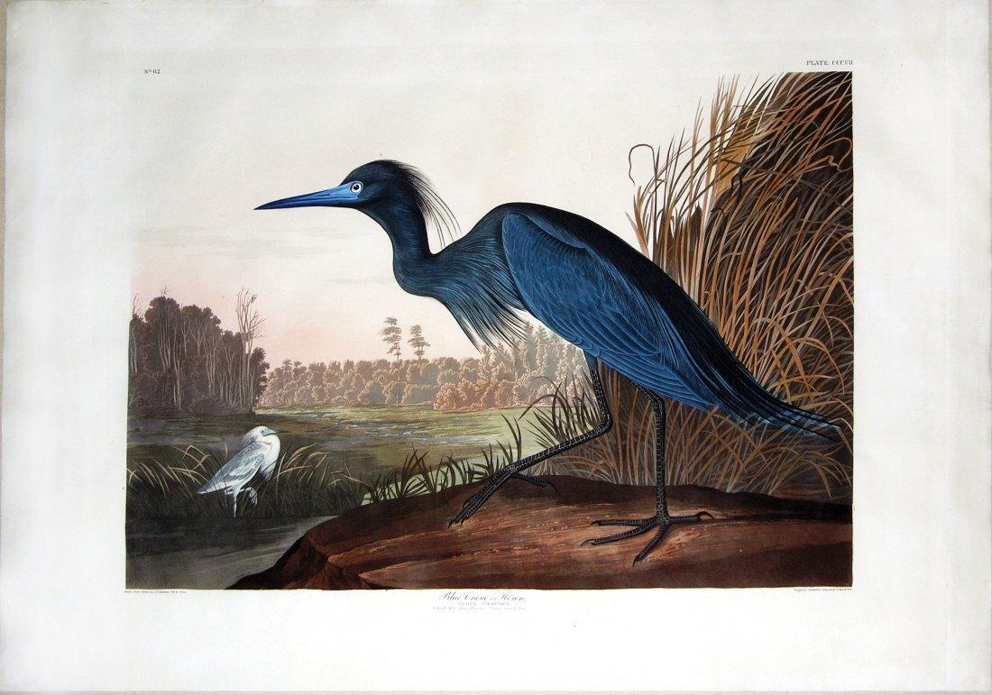 Blue Heron, Plate 307.