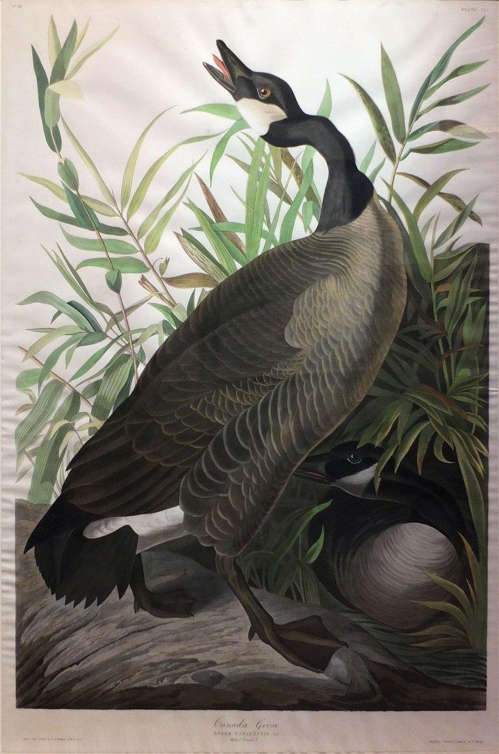 Canada Goose, Plate 201