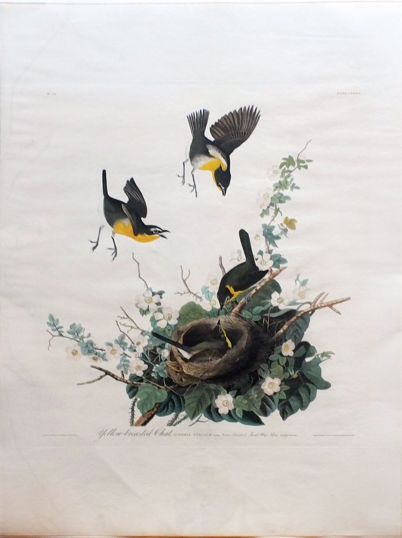 Yellow-Breasted Chat, Plate 137