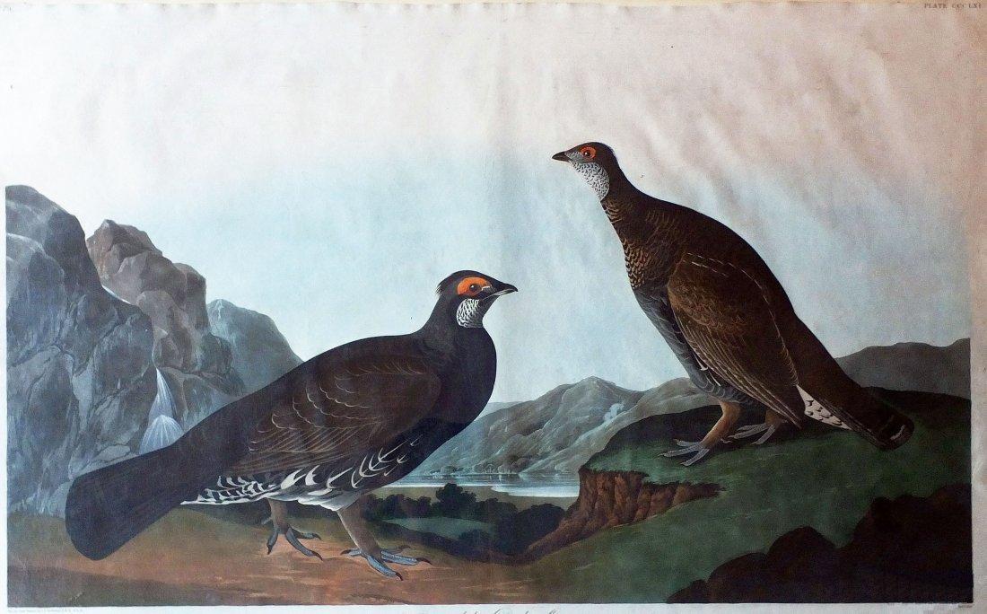 Long-Tailed or Dusky Grous, Plate 361