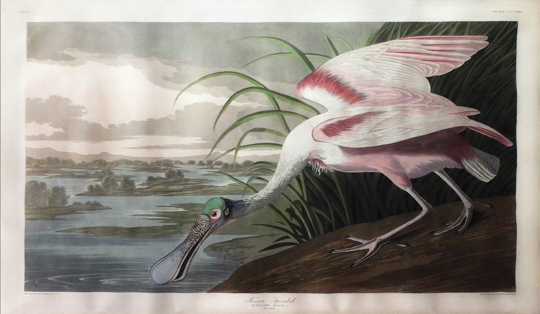 Roseate Spoonbill, Plate 231