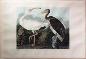 Audubon Aquatint By Havell, White Ibis