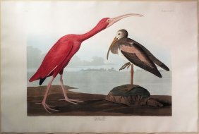 Audubon Aquatint by Havell, Scarlet Ibis