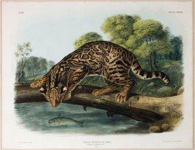 Audubon Lithographs, Imperial Folio, Ocelot