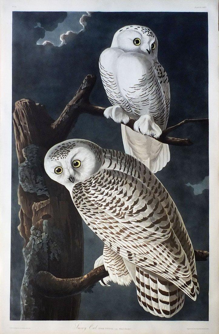 Audubon Aquatint, Snowy Owl, Plate 121